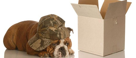 Dog and Box
